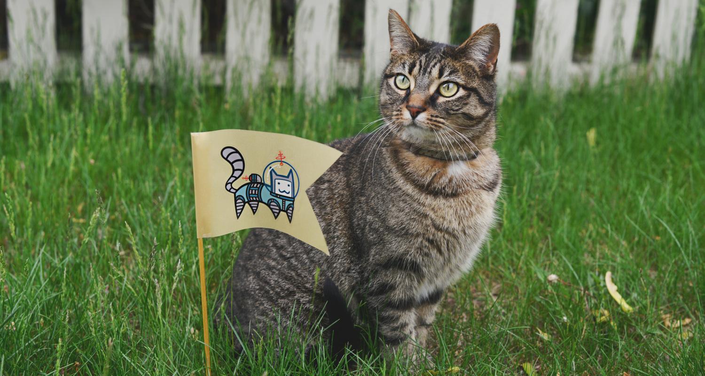 Gato con bandera de éxito